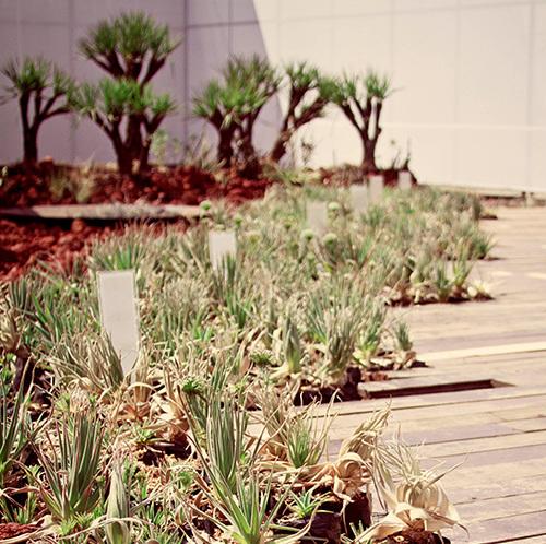 thumbnail Jardim Rupestre
